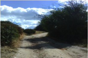 Ruta Villalba
