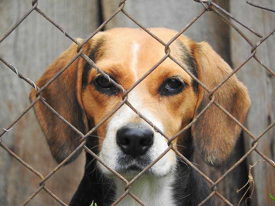 Adopción Perros Villalba