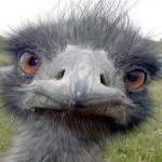 Imagen de perfil de Dakitu
