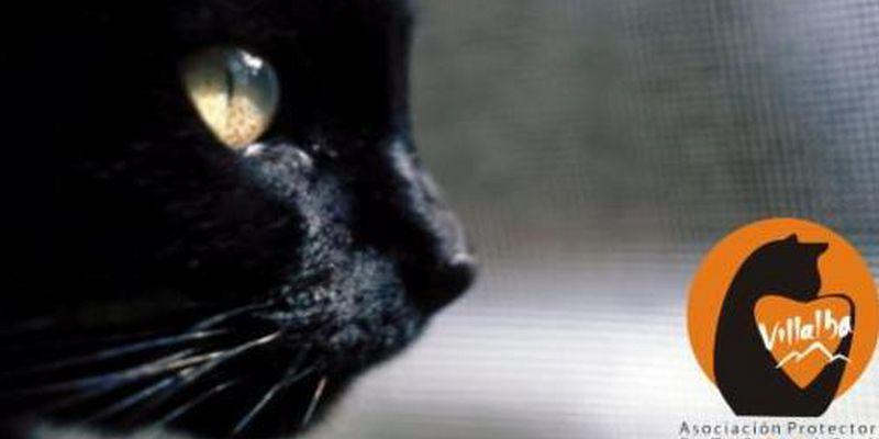 Asociación Gatos Sin Hogar Villalba (GSH)